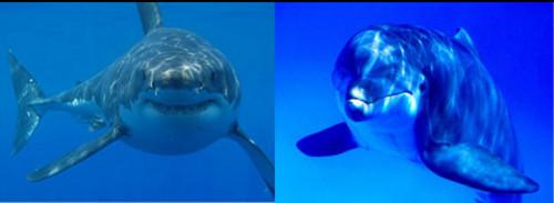 Акули и делфини – кой от кого се страхува